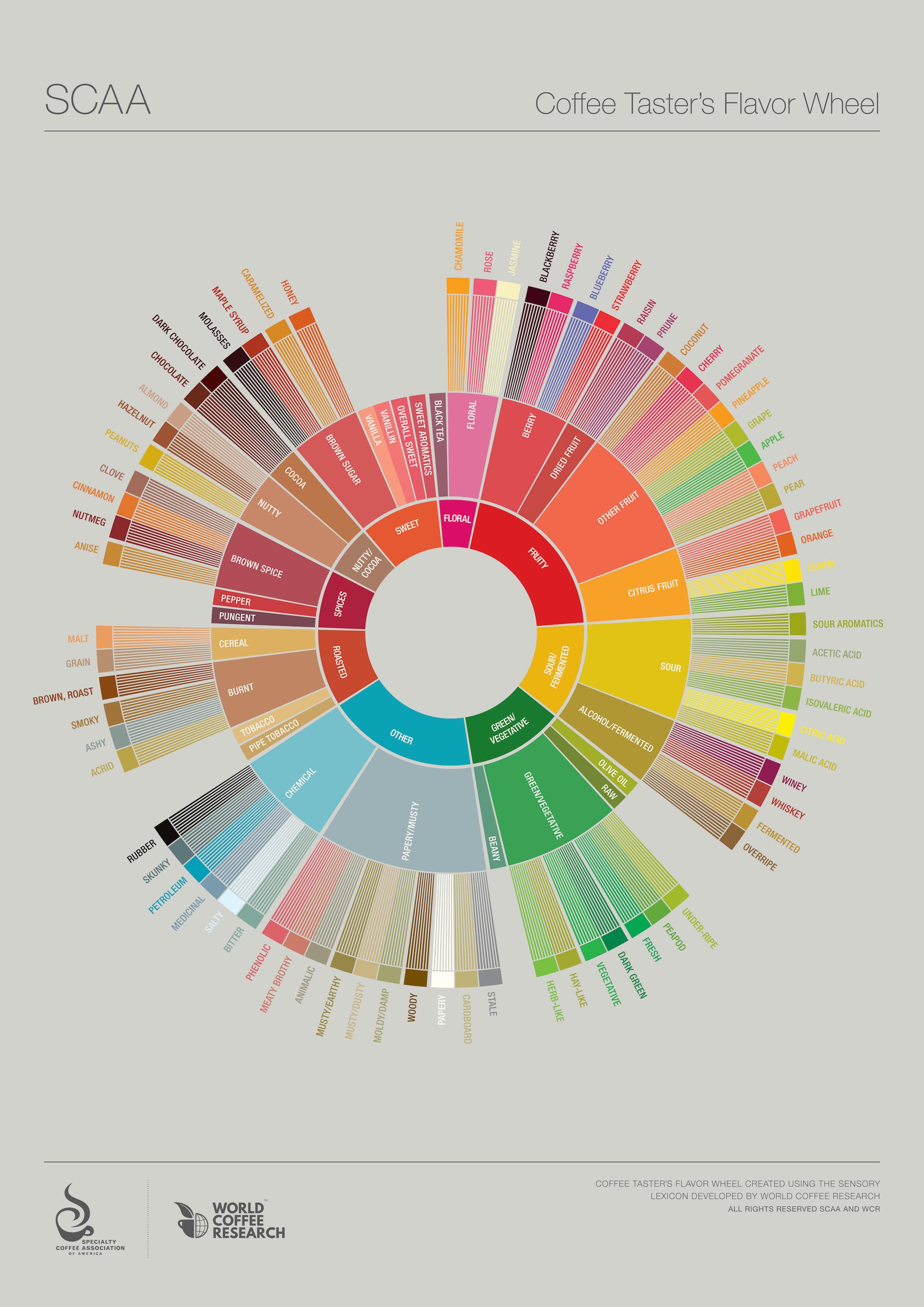 Rueda sabor café diseño gráfico